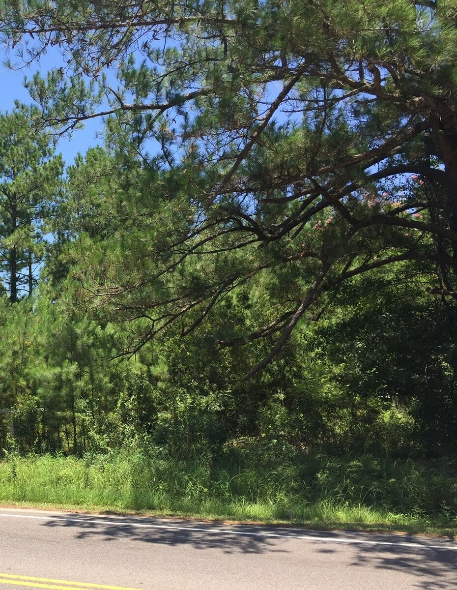 1  Acre Wooded Lot Summerville, SC 29483